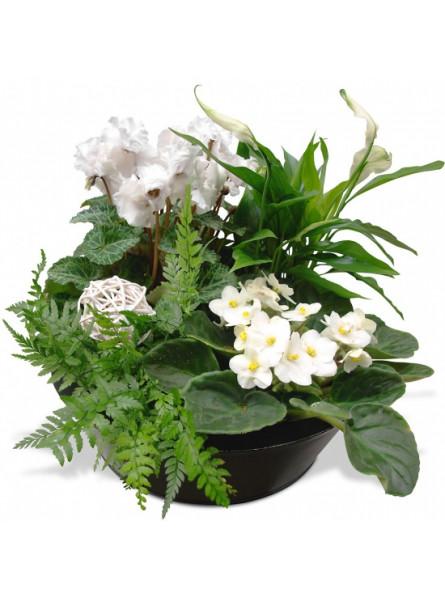 COMPOSITION DE PLANTES JARDIN ZEN. LIVRAISON FLEURS - ENVOI FLEURS - ENVOYER DES FLEURS